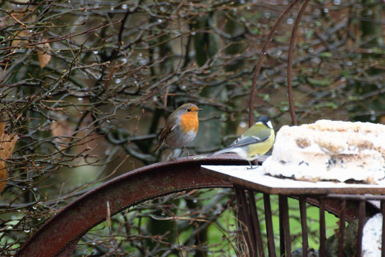 Vogels Nederland Tuin : De vogels in de tuin in kunder kunder