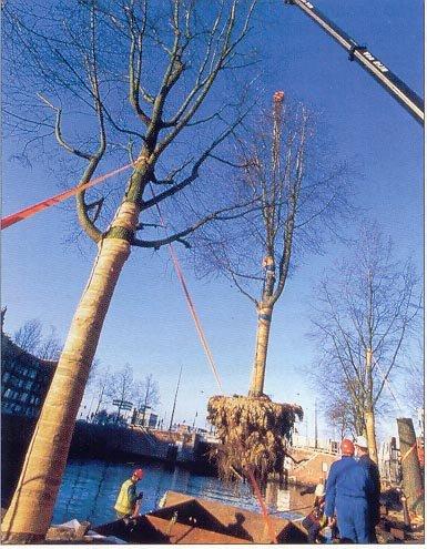 Bomen tijdelijk op dekschuit drupal for Tuinprogramma op tv