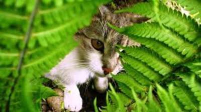 Kattenstront In Tuin : Katten in uw tuin drupal